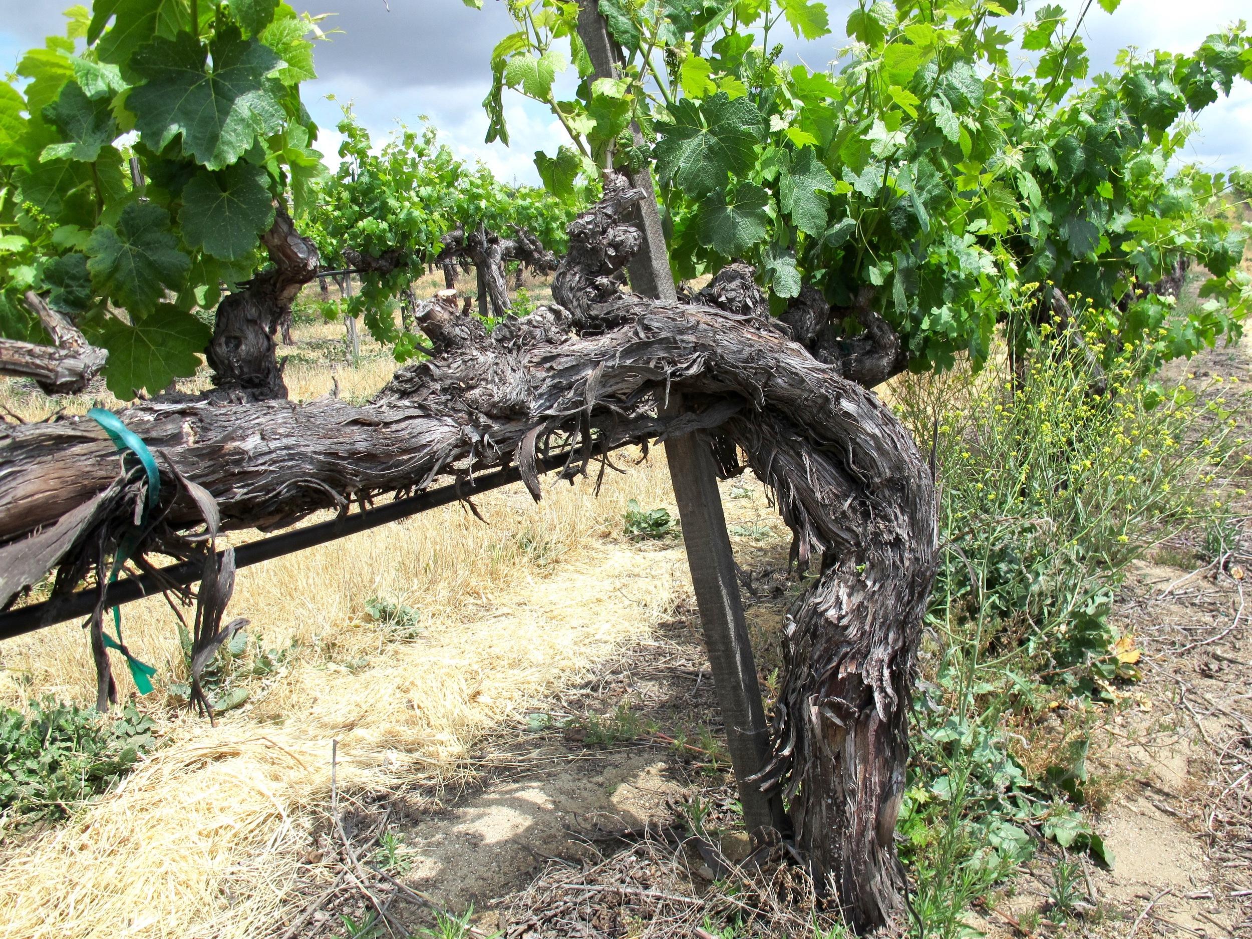 Temecula Wineries