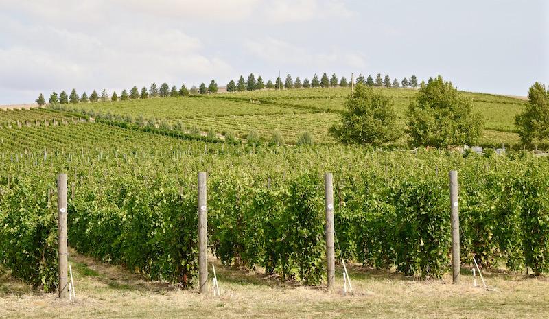 Walla Walla Vineyards
