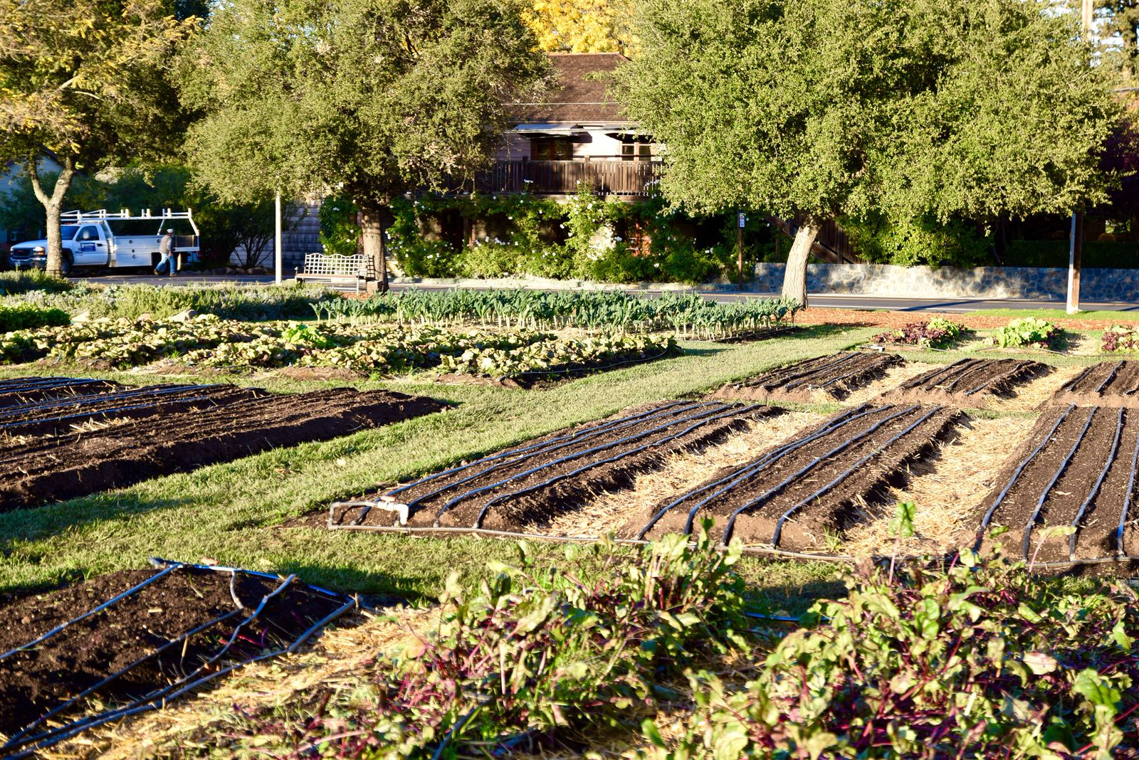 French Laundry gardens