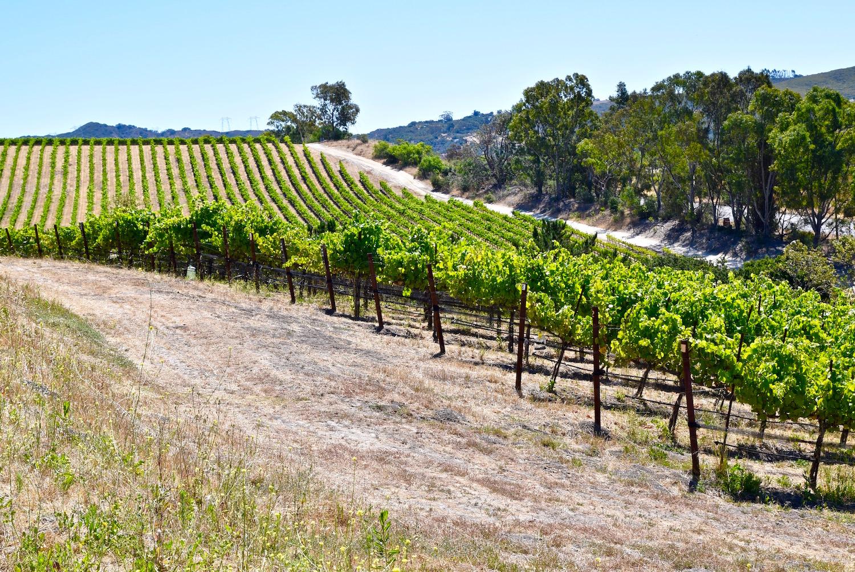 San Luis Obispo Roll Out The Barrels Wine Weekend