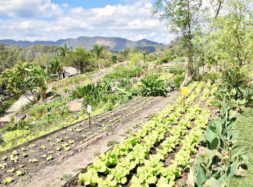 Finca Agroecologica Vinales.jpg