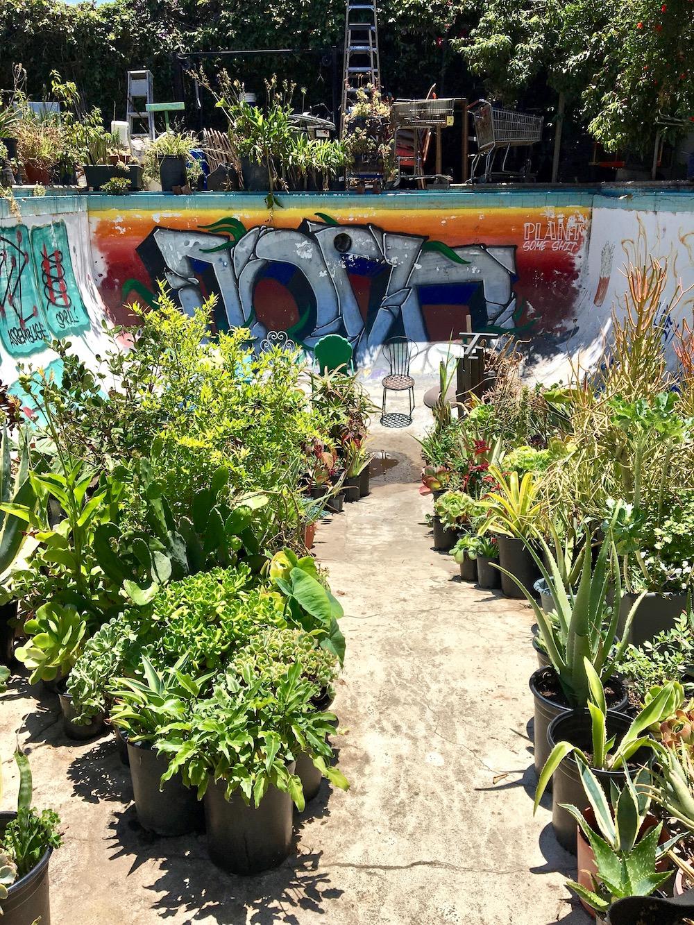 Gangsta Gardener South LA.jpg