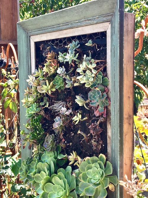 Gangsta Gardener plant picture.jpg