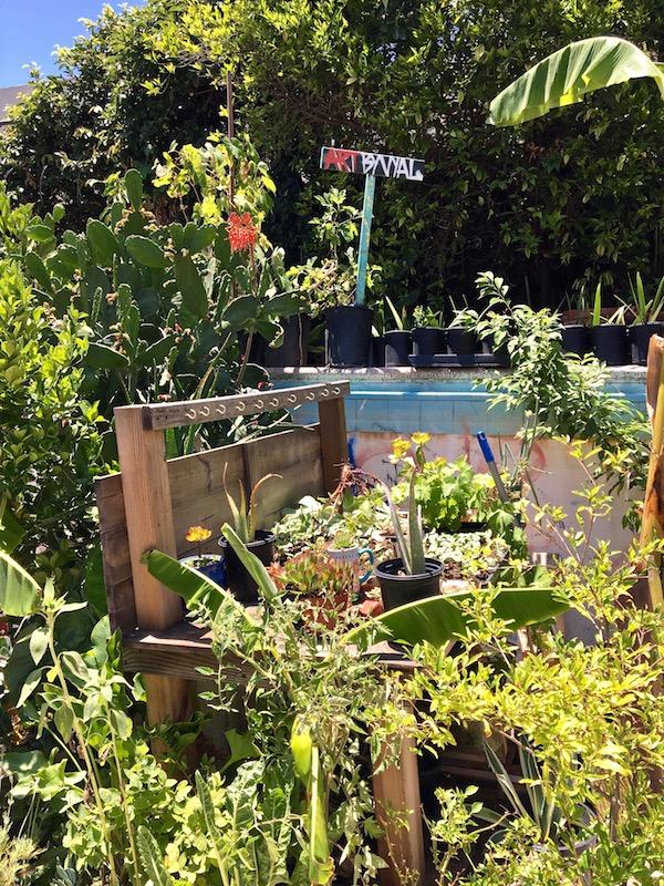 Gangsta Gardener plants.jpg