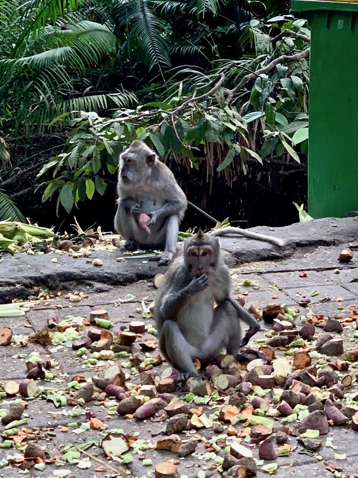 monkeys eating.jpeg
