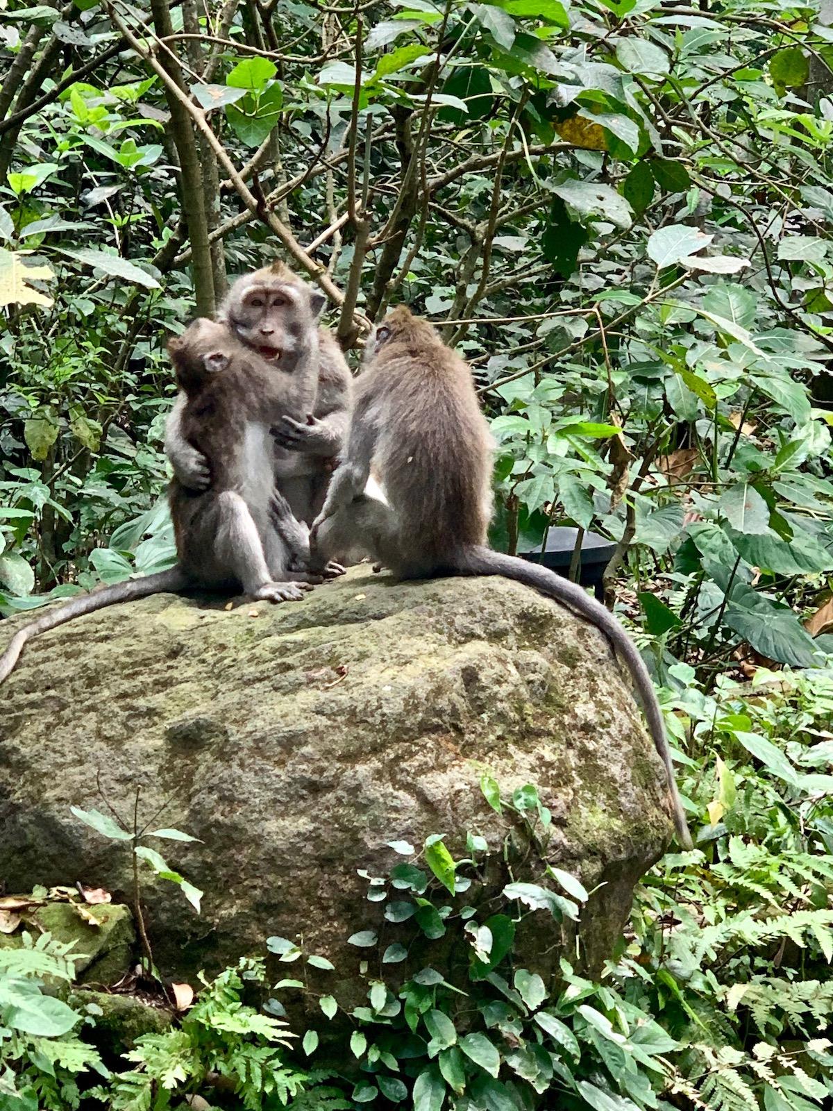 ubud monkey forest.jpeg