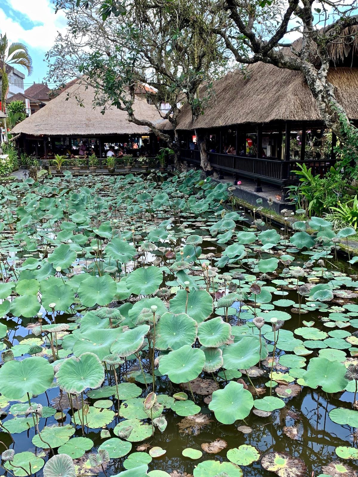 Lotus Pond Ubud.jpeg