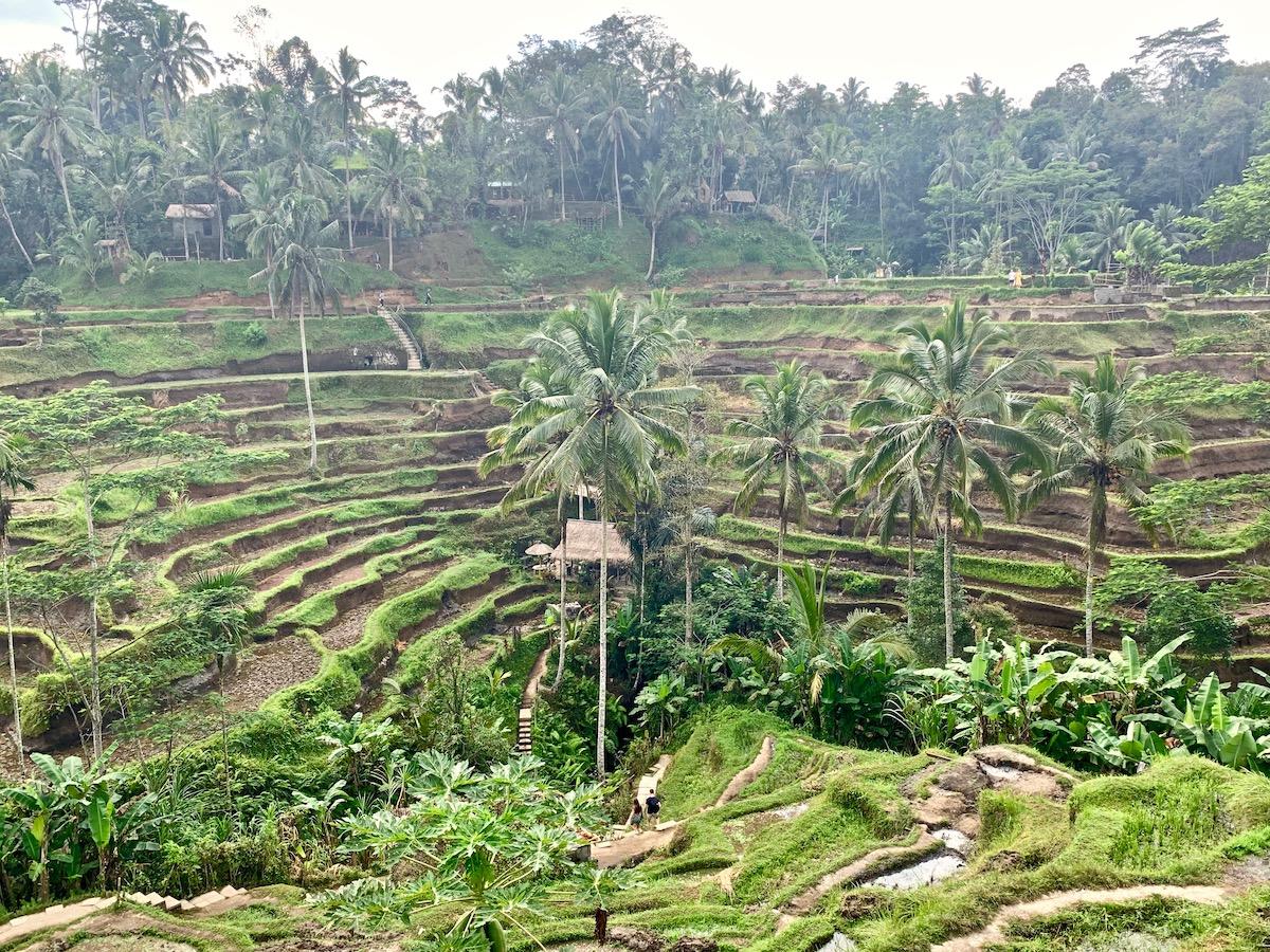 Tegalalange Bali.jpeg