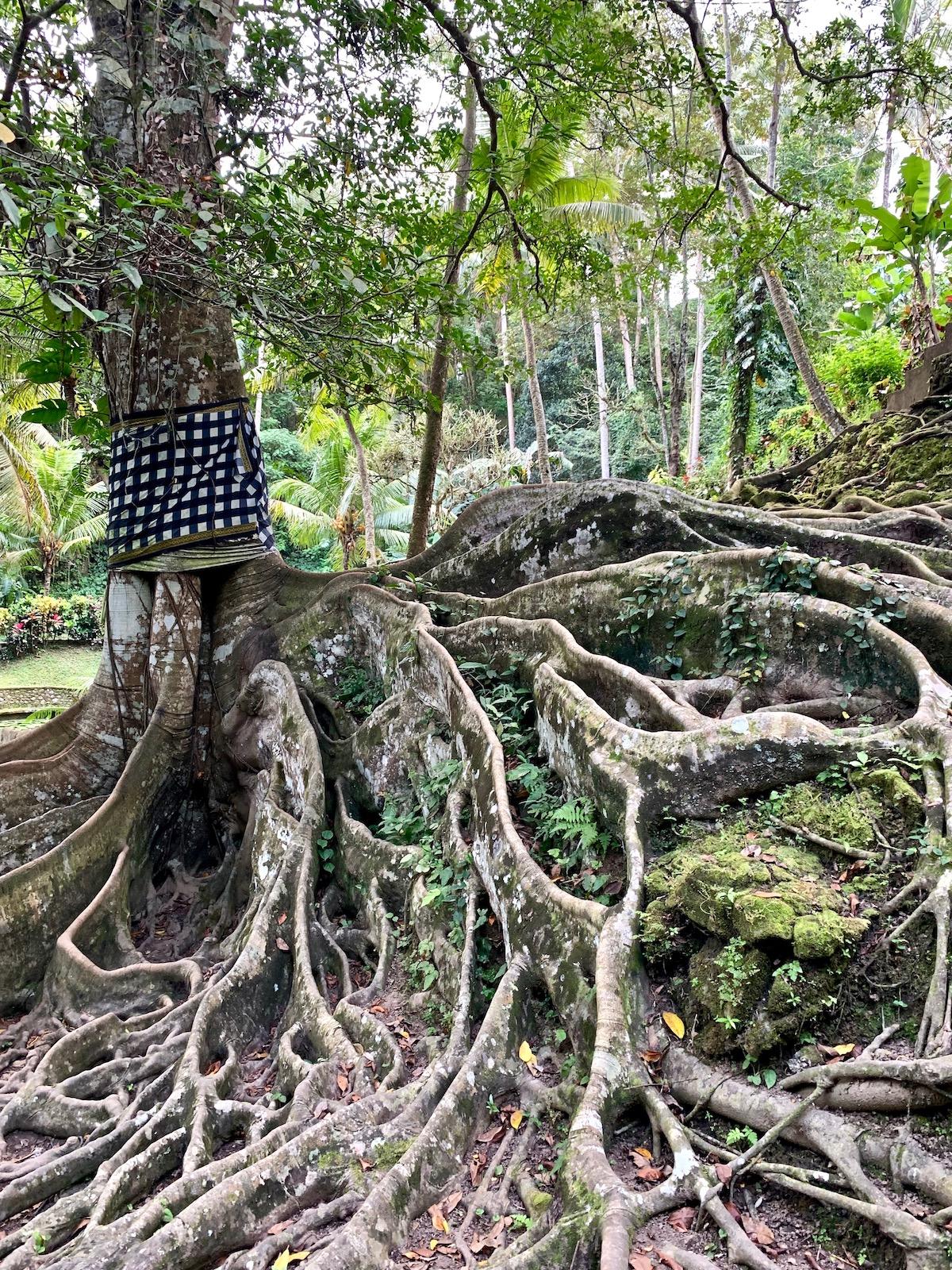 Goa gajah tree.jpeg
