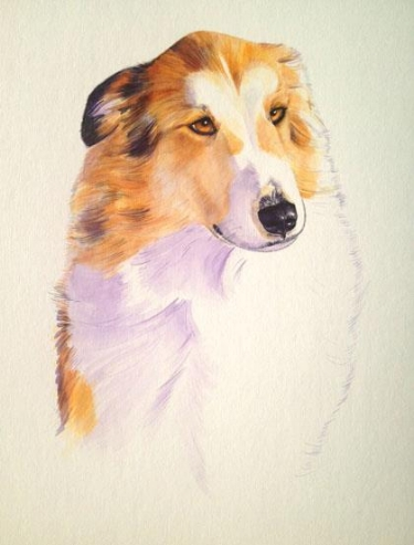 Collie/Pyrenees Mix - 15 x 20""