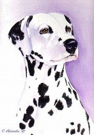 "Dalmatian 15 x 20"""