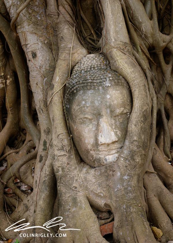 Thailand_Ayutthaya_Tree-Statue.jpg