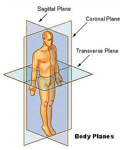 Bodyplanes