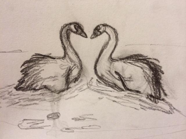 swanssketch.JPG