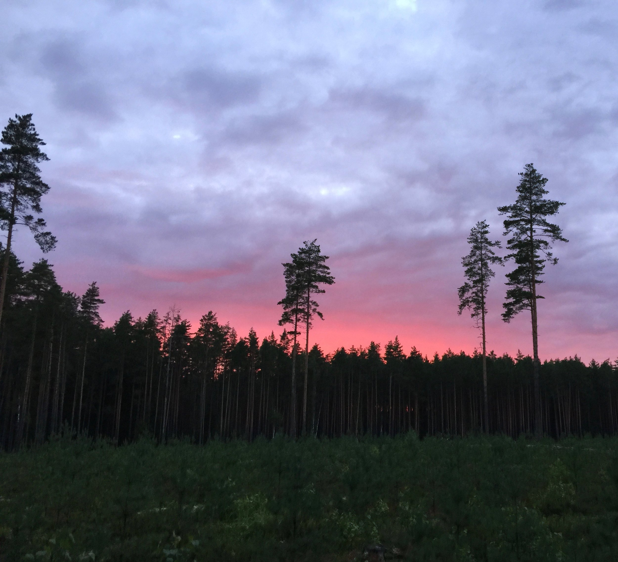 """A view from the """"forest studio"""" in the deep forest of Põlvamaa in South Estonia."""