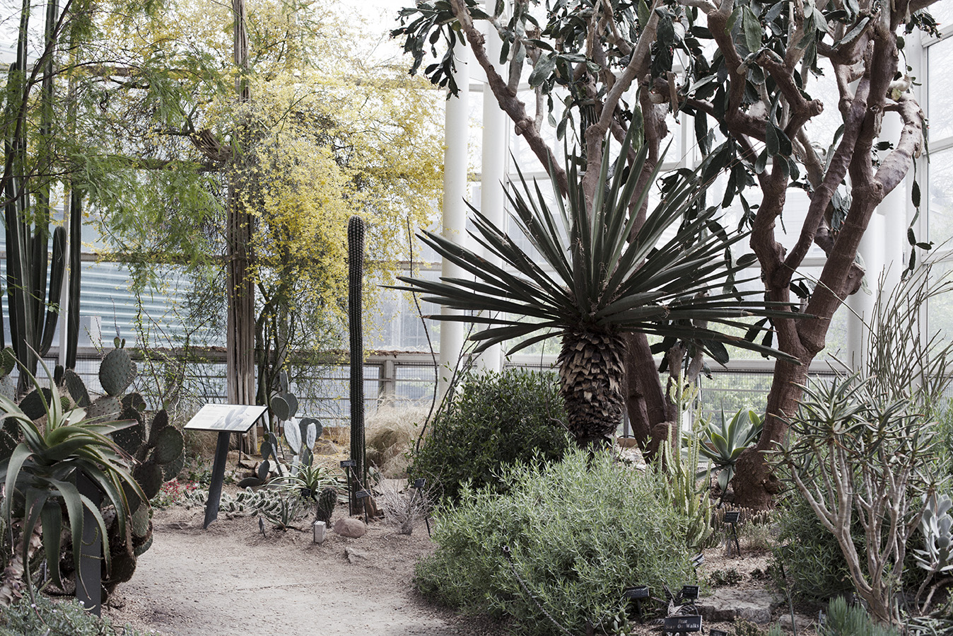 Brooklyn Botanic Gardens, 2015
