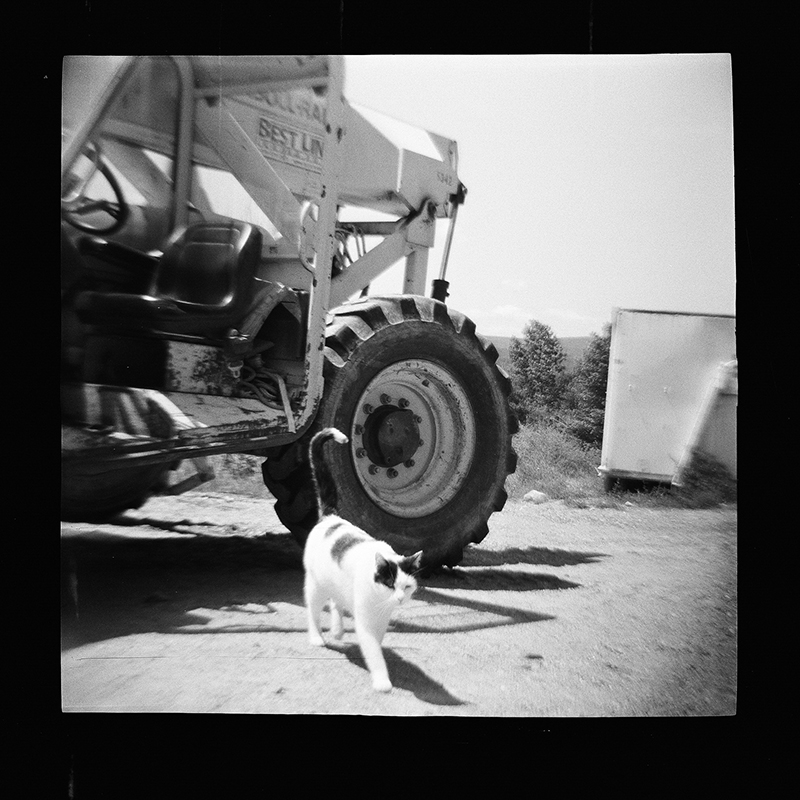 Upstate NY - 120 film in Diana f+