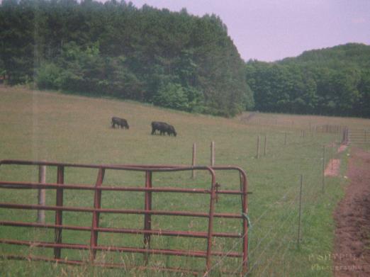 Pond Hill Farm - July 2014