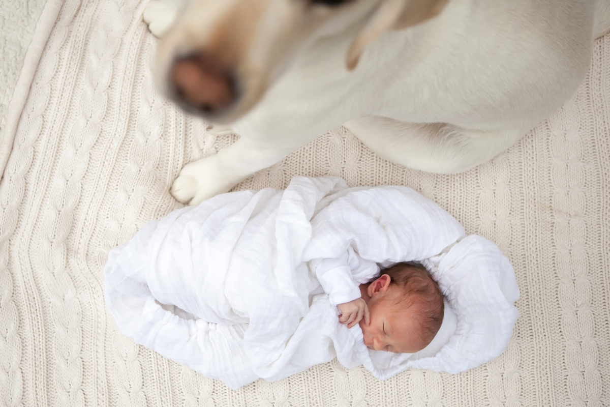 kate stafford photography | newborn lifestyle