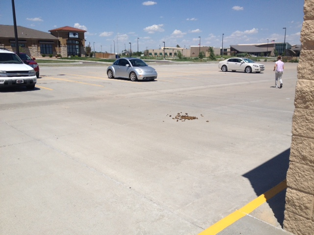 You know you're in Kansas when... there's horse poop in the parking lot.
