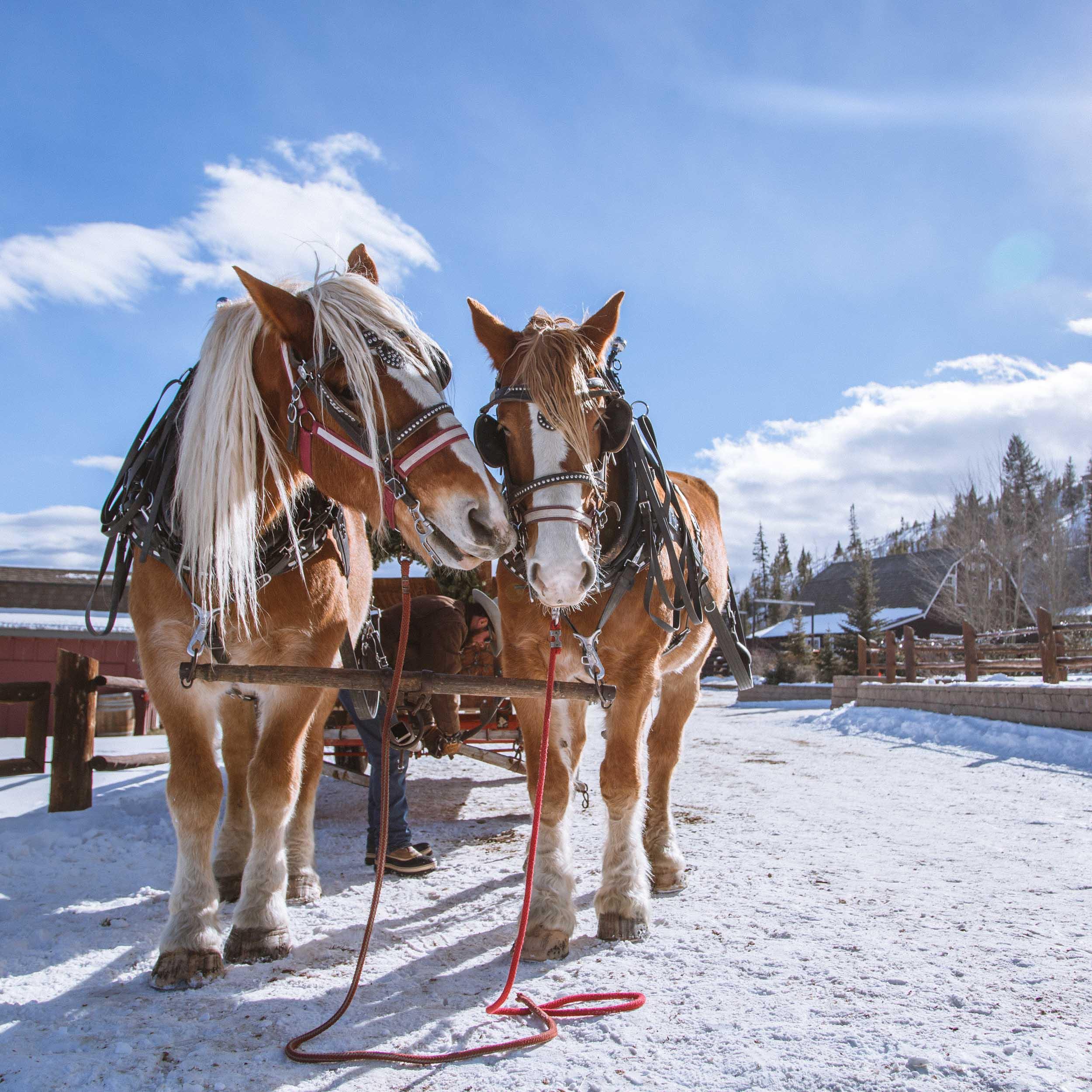 Shelby Knick_C Lazy U Ranch_-8.jpg
