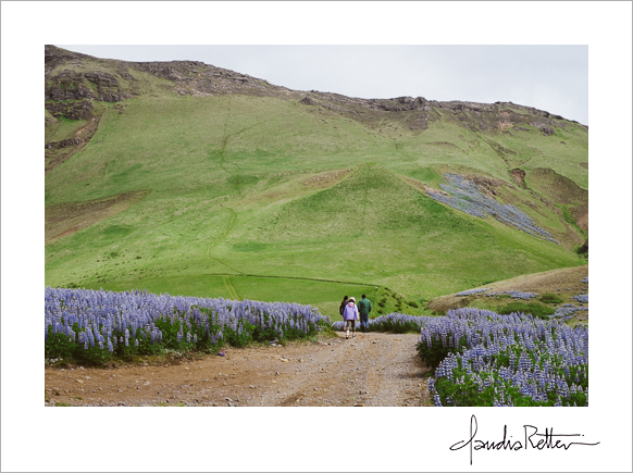 Hiking in Vik, Iceland