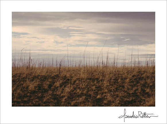 Grasses, Antelope Island State Park