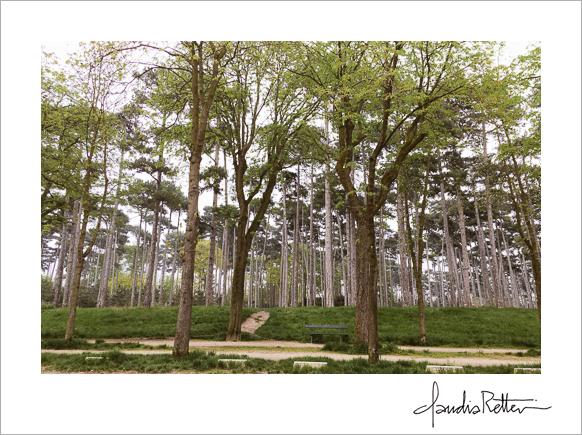 Trees in the Bois de Boulogne