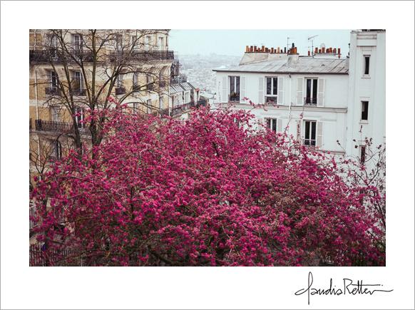 Bright pink tree, Montmartre, Paris