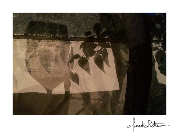 Shadow of wine glass and vines