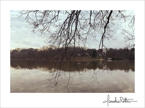 Griggs Reservoir trees