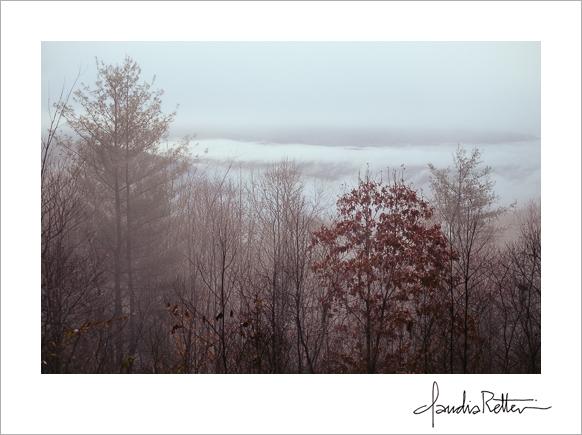 November woods, Asheville, North Carolina