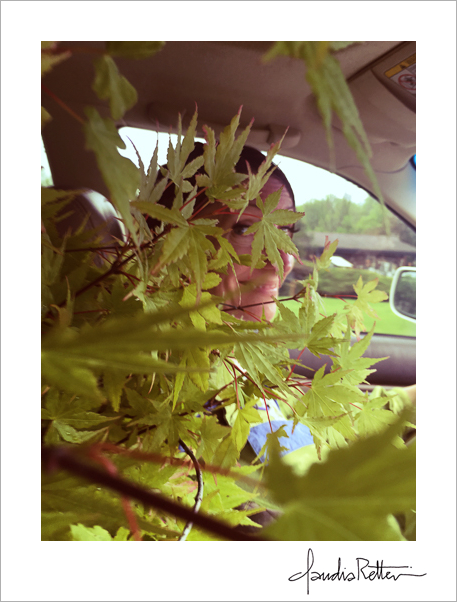 Tree in the car