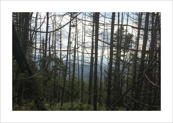 long-trail-vermont-claudia-retter-6.jpg