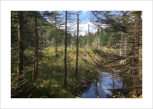 long-trail-vermont-claudia-retter-15.jpg