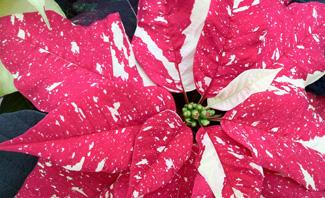 Lynde_GardenCenter_Holiday.jpg