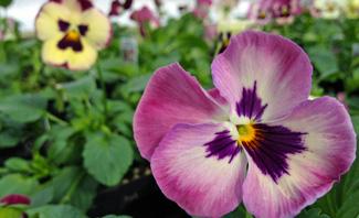 Lynde_GardenCenter_Spring2.jpg
