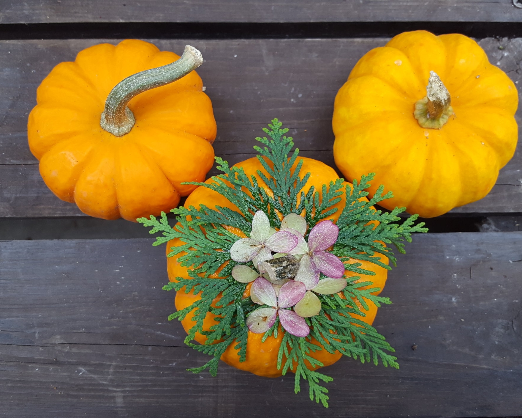 Mini Pumpkin - $12