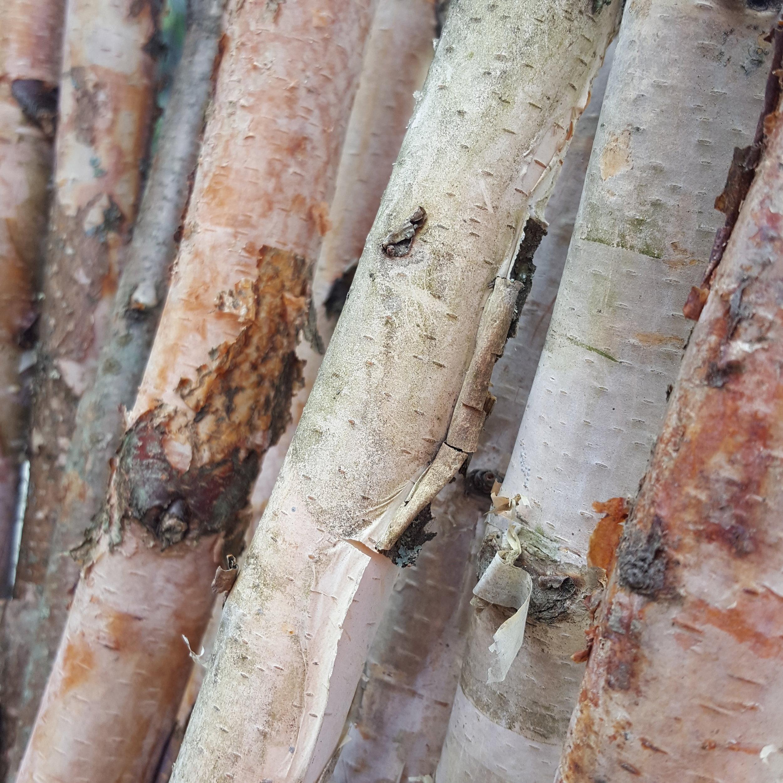 Birch Pole
