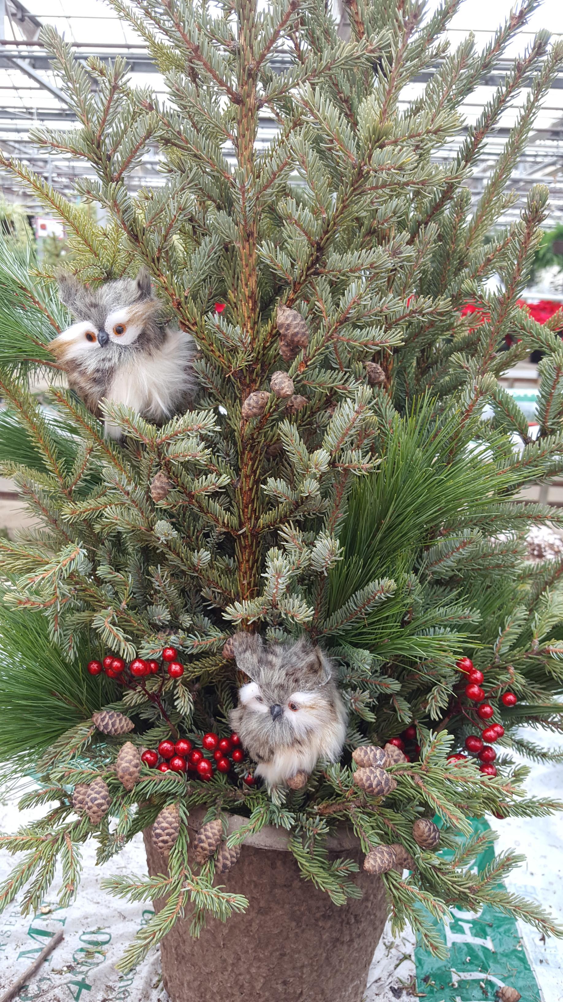 Custom - fuzzy owls