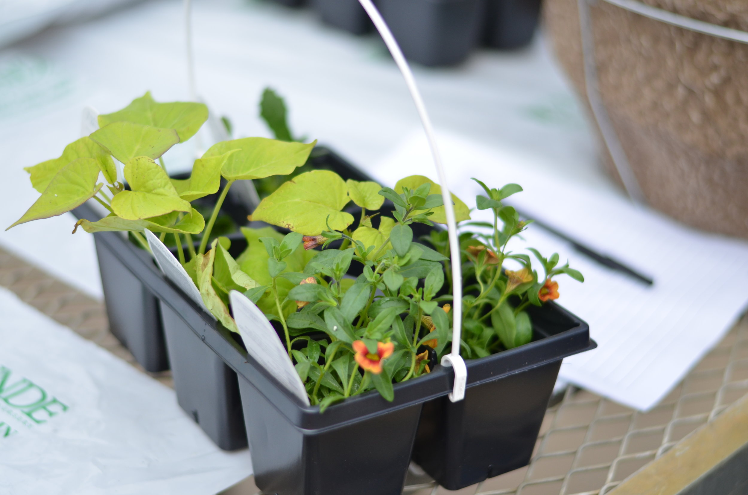 Plant Plugs