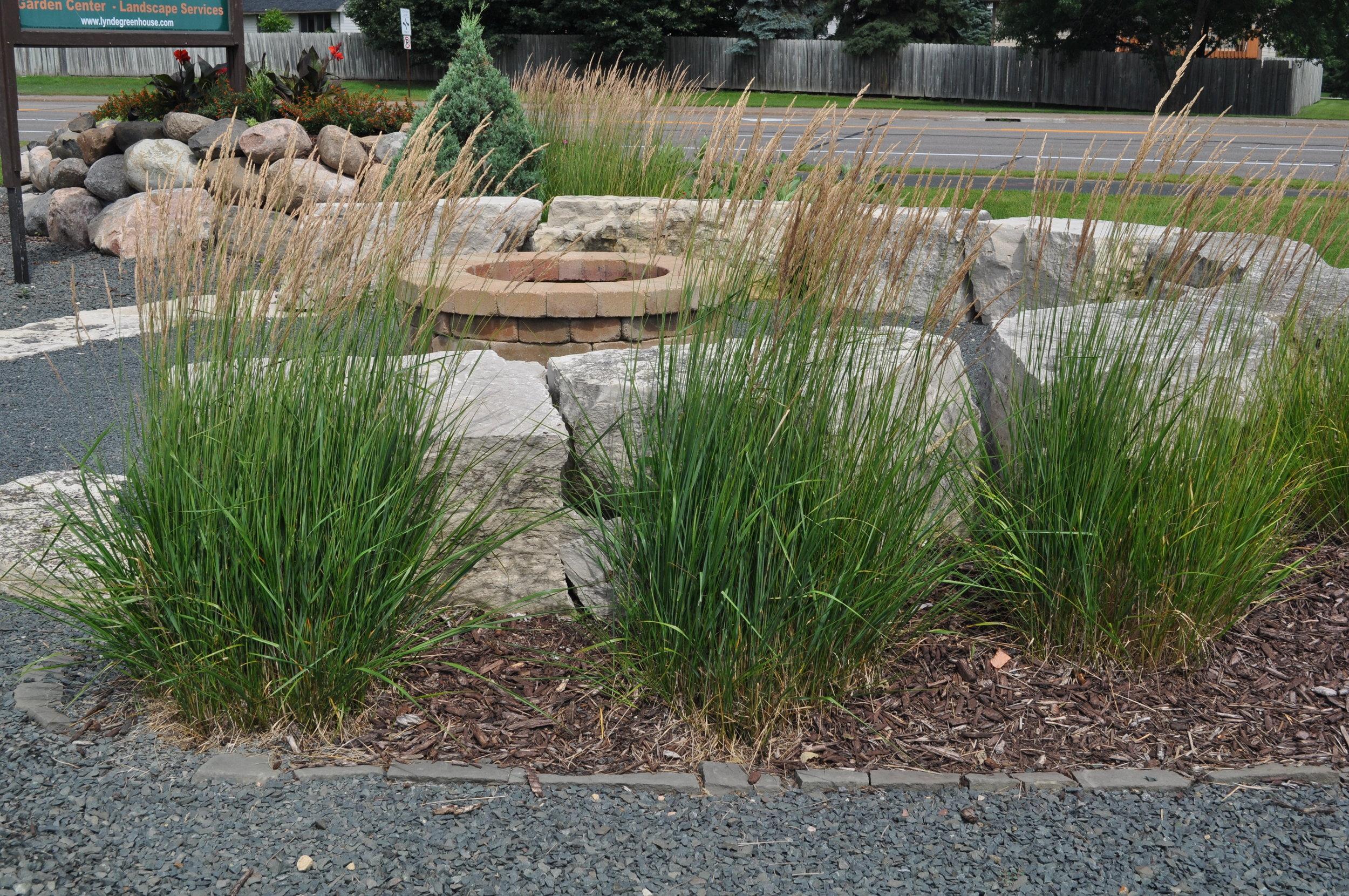 Perennial Grasses Lynde Greenhouse Nursery