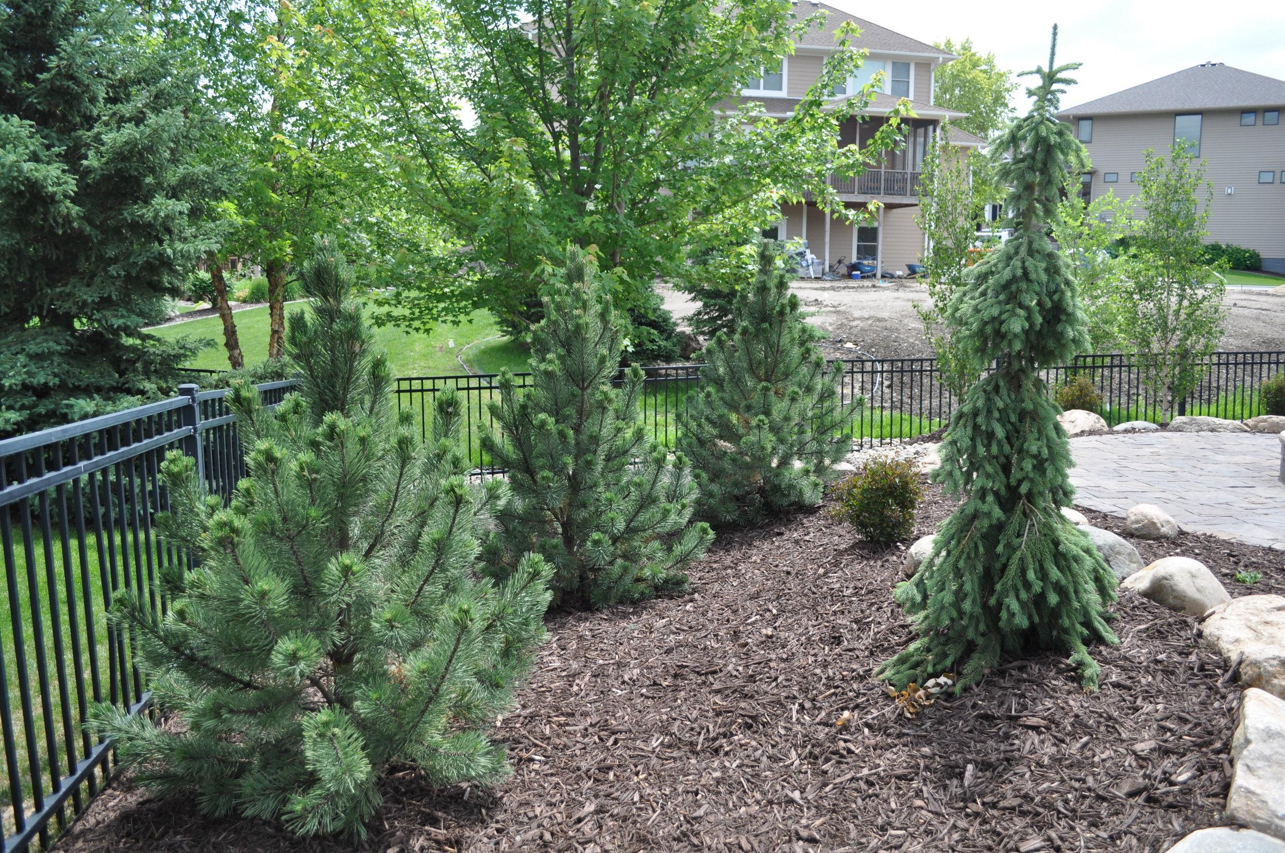 Trees = minimal maintenance