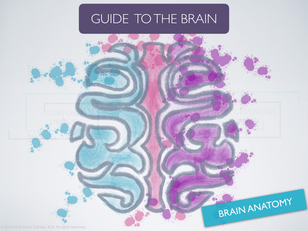 GUIDE TO THE BRAIN