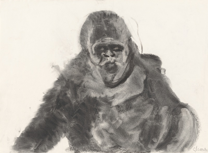 GORILA MIRÁNDOME (GORILLA WATCHING ME), 2006