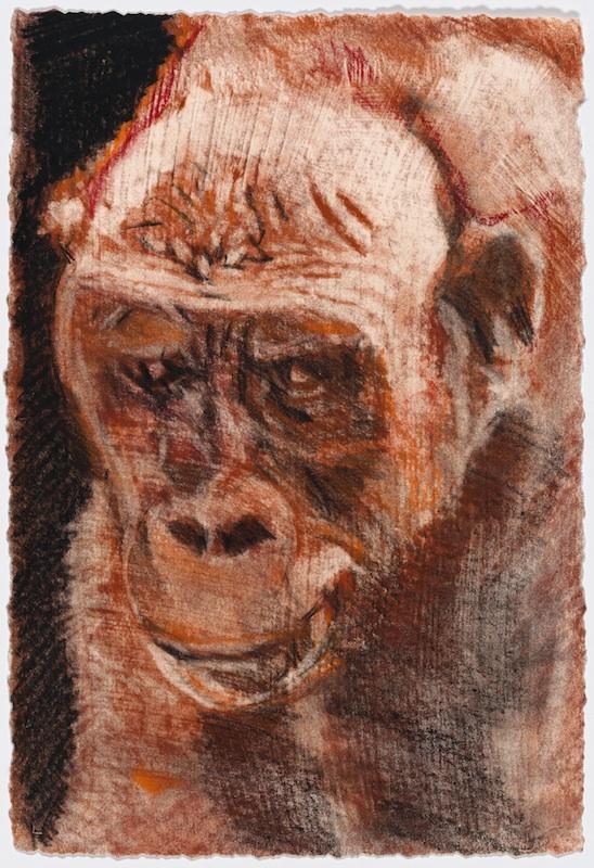 MACHO ROJO (RED MACHO), 2005