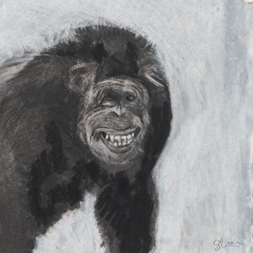 Great Ape Sketchbook