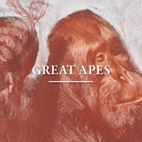 greatapes-w.jpg