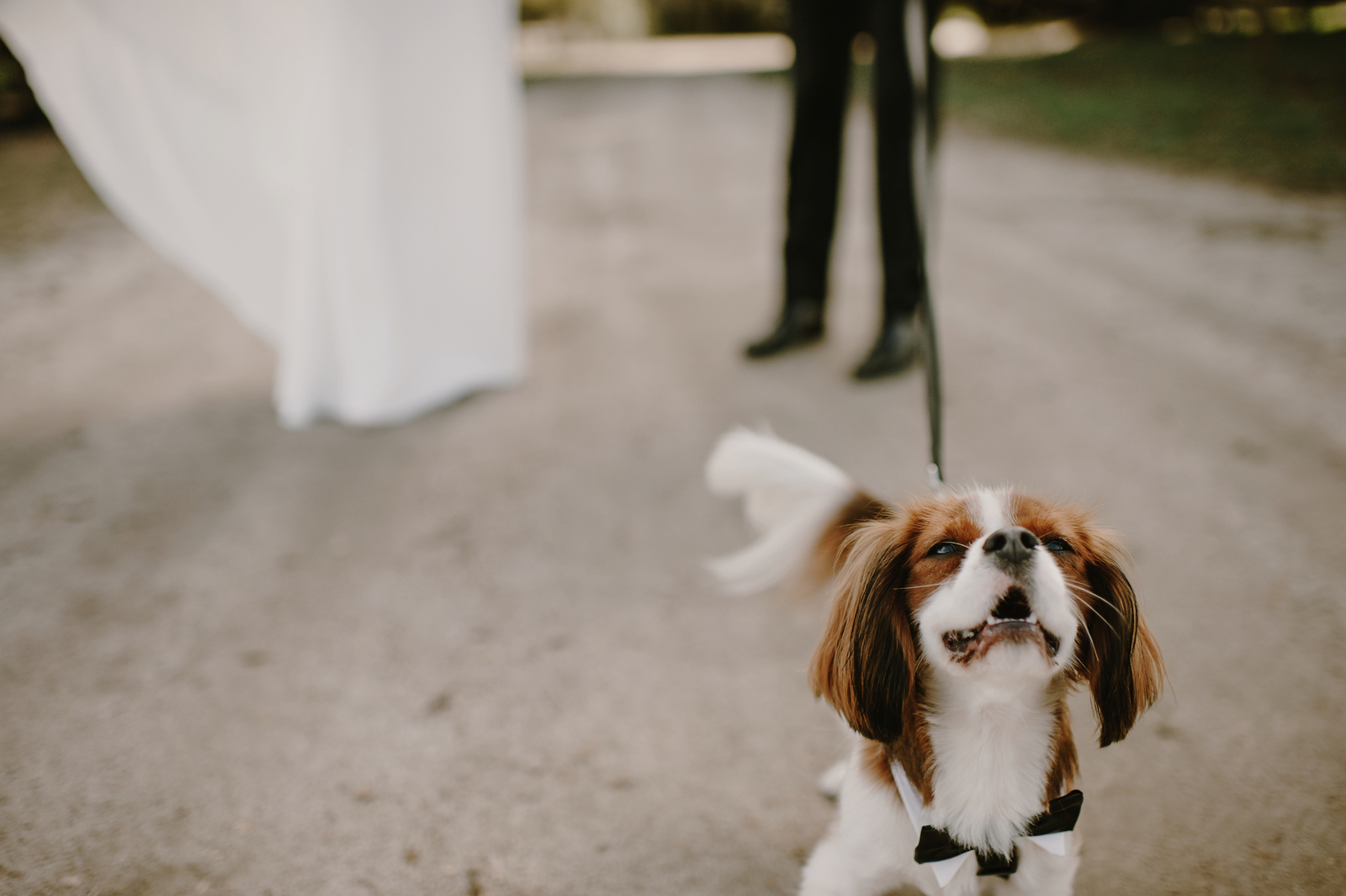 Santa_Lucia_Preserve_Fall_Forest_Wedding029.JPG