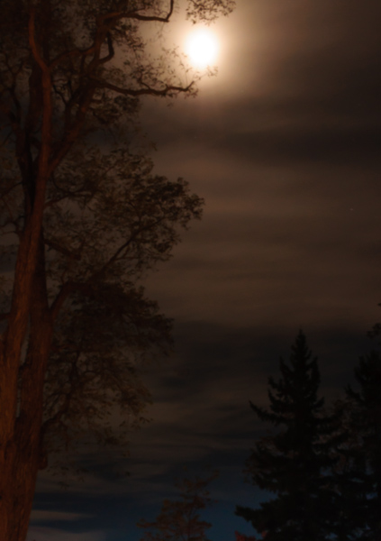 sepia moon_night shoot-9909.jpg